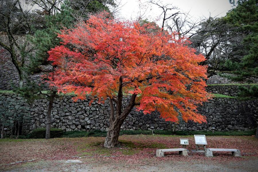 金沢 紅葉